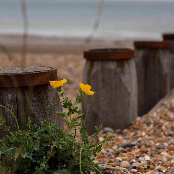 pett level, wild flowers, card for sale, photo clare hocter